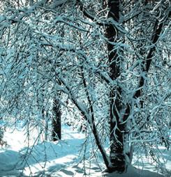 Snowy Tower: A Book Talk