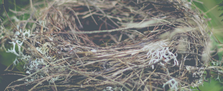 Nest, Photo Credit Luke Brugger